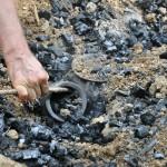 Martin holte am Sonntag die gebrannte Keramik aus der Grube.