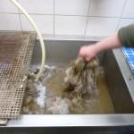 Das Waschen der Rohwolle.